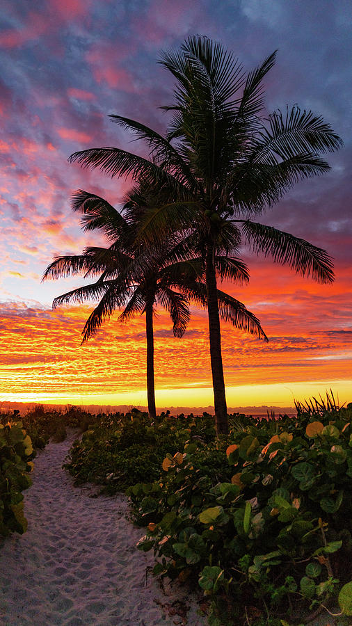 Sunrise Palm Path Delray Beach Florida by Lawrence S Richardson Jr