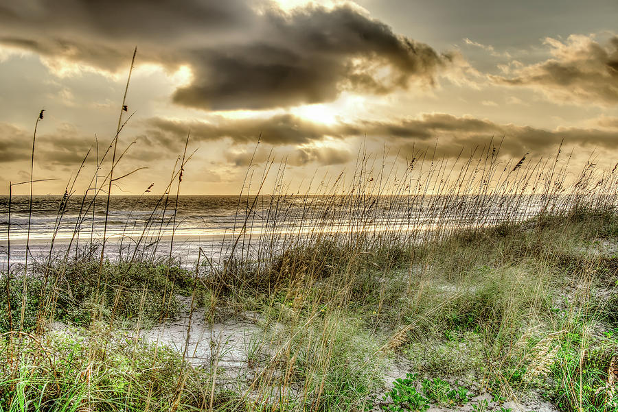 Sunrise Sea Oats by Joedes Photography