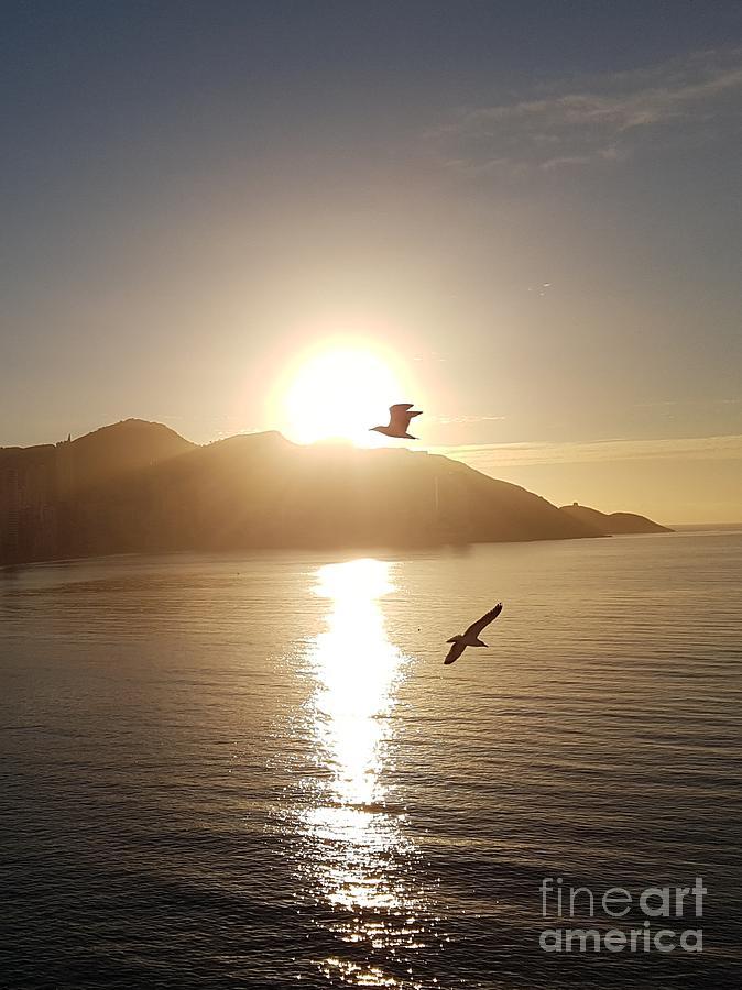 Sunrise seagull by Jeepee Aero