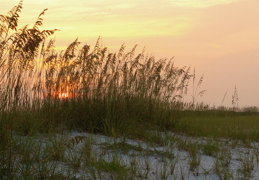 Landscape Photograph - Sunrise through the Sea Oats by Tina Walsh