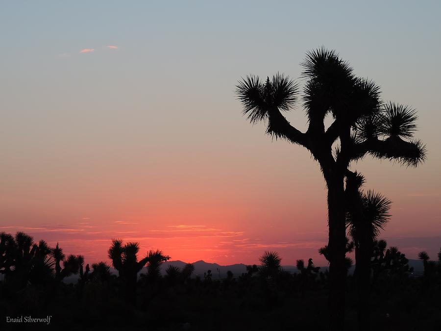 Sunrise With Joshua Trees 8/30/2017 by Enaid Silverwolf
