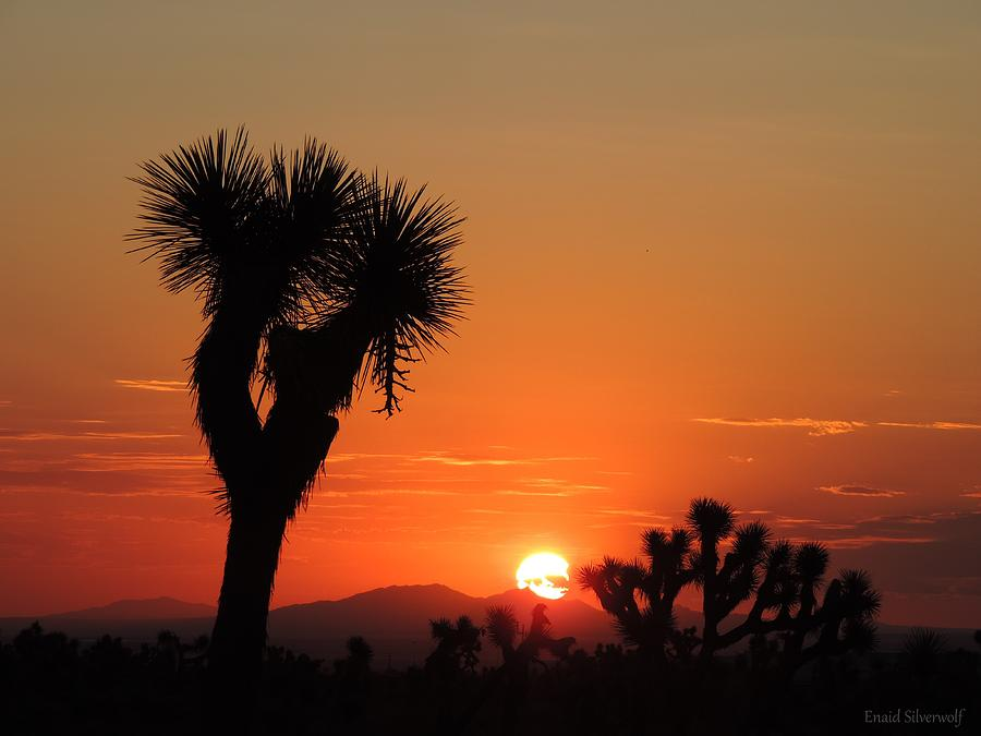 Sunrise With Joshua Trees, Palmdale, California 8/30/2017B by Enaid Silverwolf