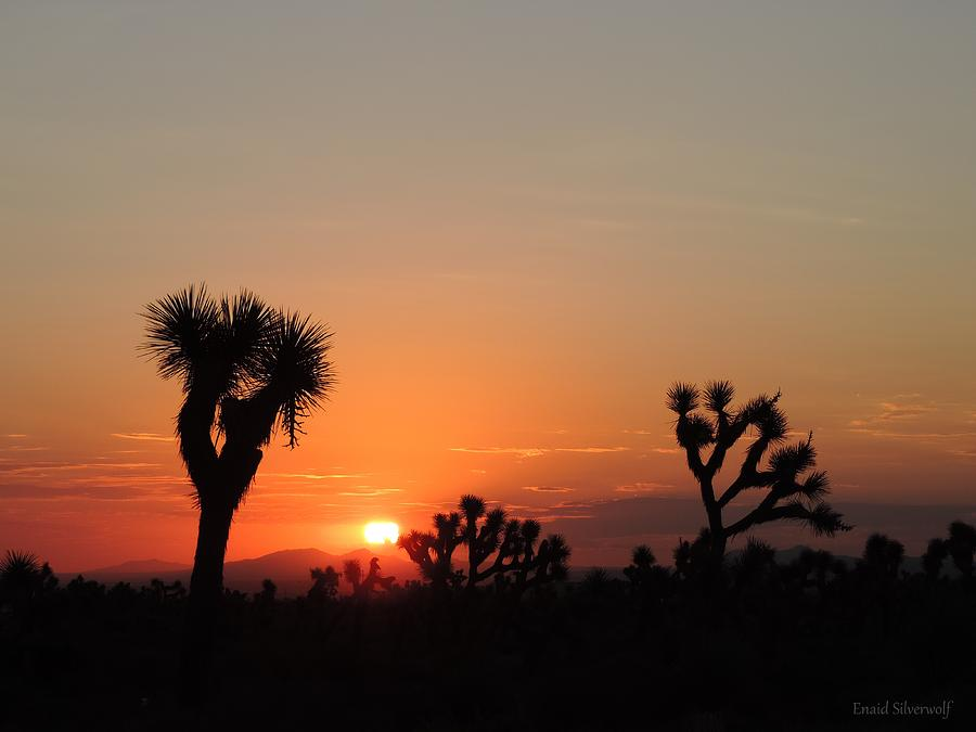 Sunrise With Joshua Trees, Palmdale, California 8/30/2017C by Enaid Silverwolf