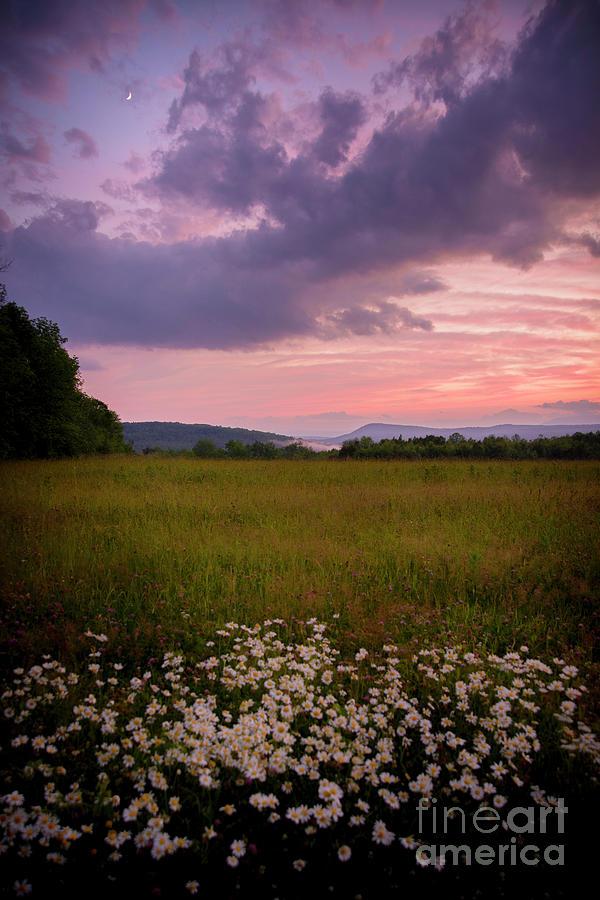 Sunset and Daisy's  by Alana Ranney