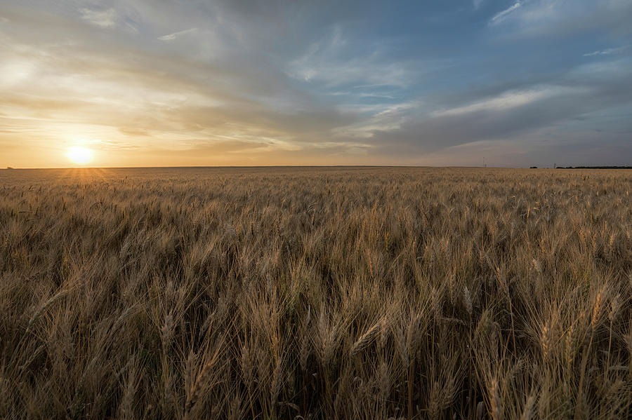Sunset and Wheat by Scott Bean