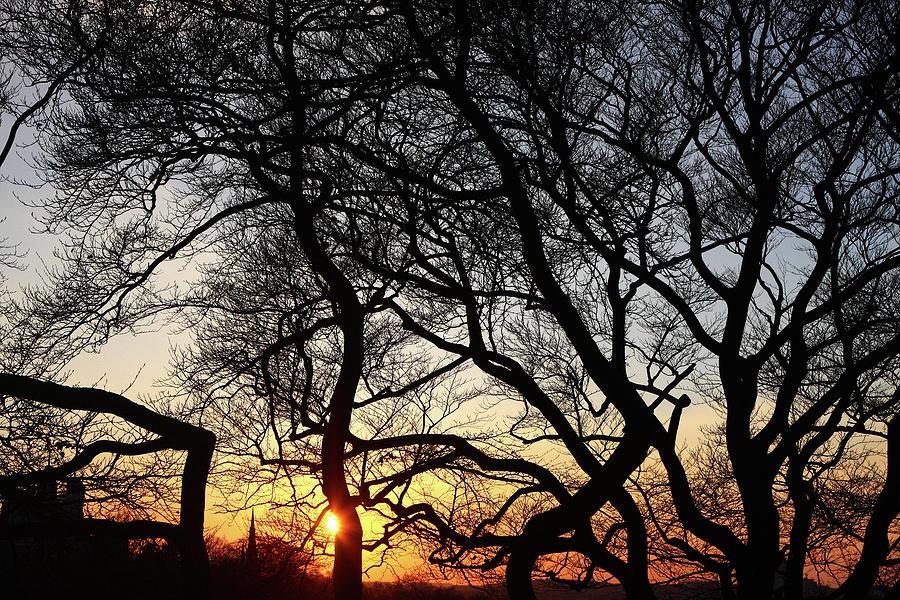 Sunset at Greenwich Park, London, England by Aidan Moran