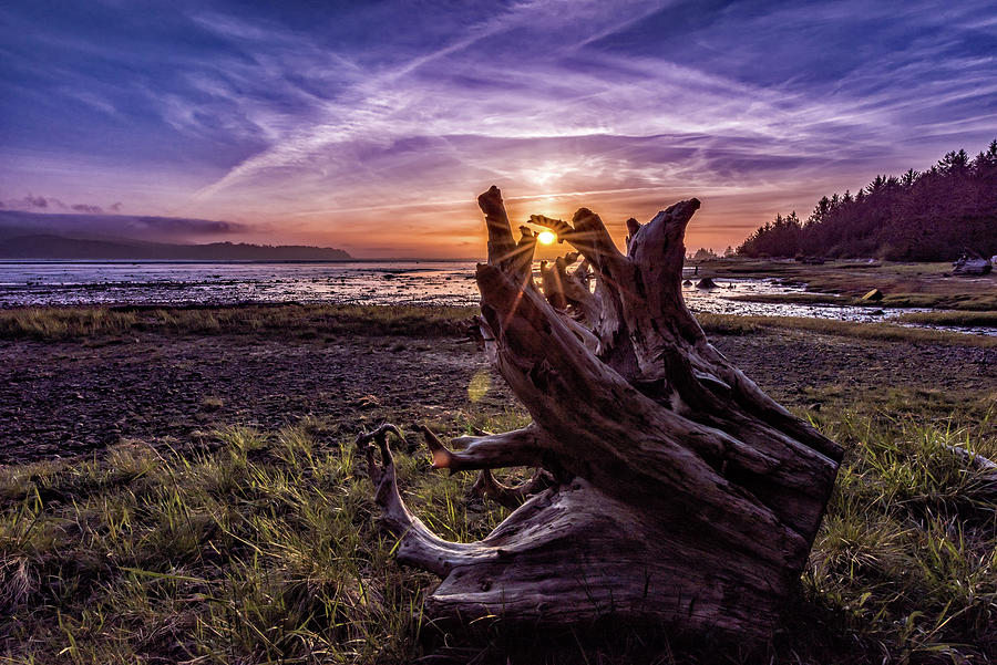 Sunset at Kilchis Point Reserve by Johanna Froese