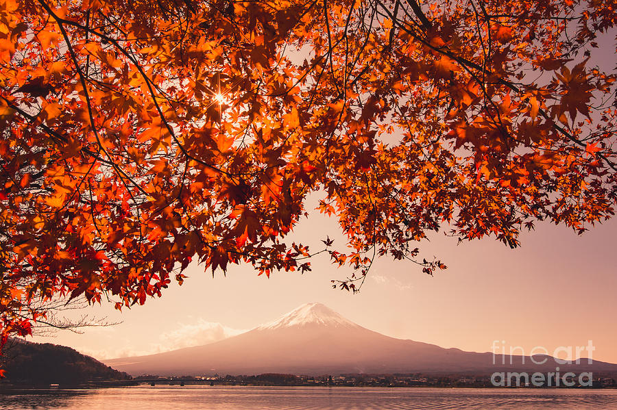 Sunrise Photograph - Sunset At Mountain Fuji And Red Maple by Ommaphat Chotirat