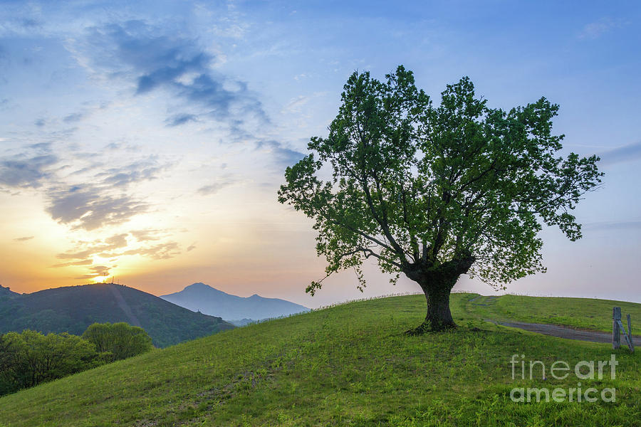 Sunset at the Basque Country by Fine Art On Your Wall