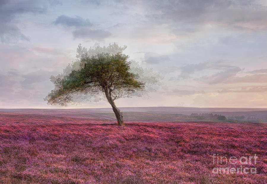 Sunset at the Lone Tree by Janet Burdon