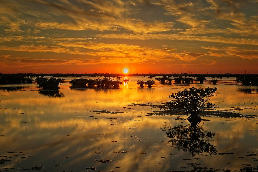 Sunset at the Salt Marsh Mangroves by Roy Thoman