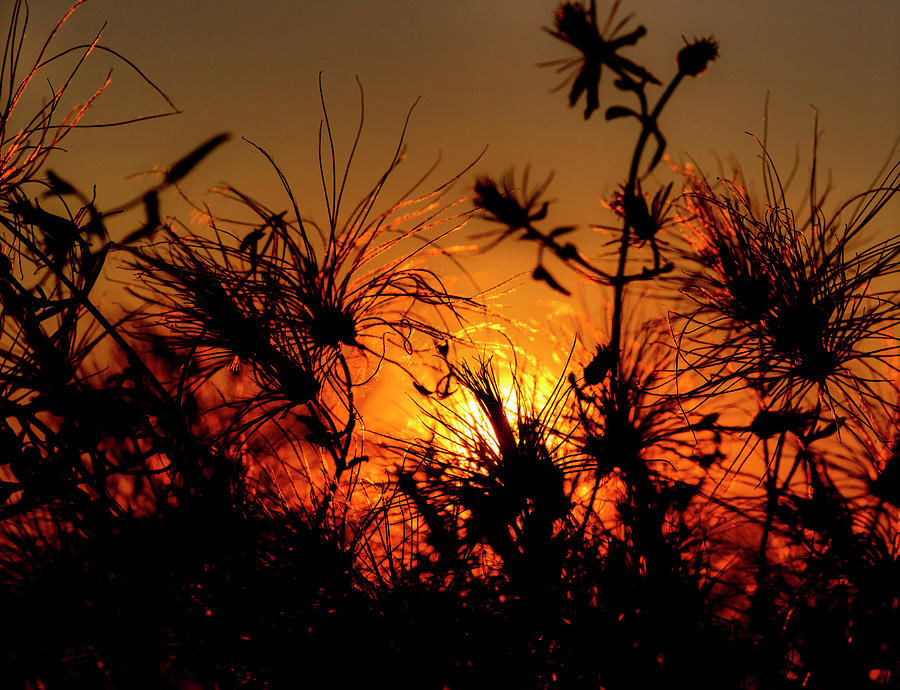 Sunset Fireworks by Stephen Anderson