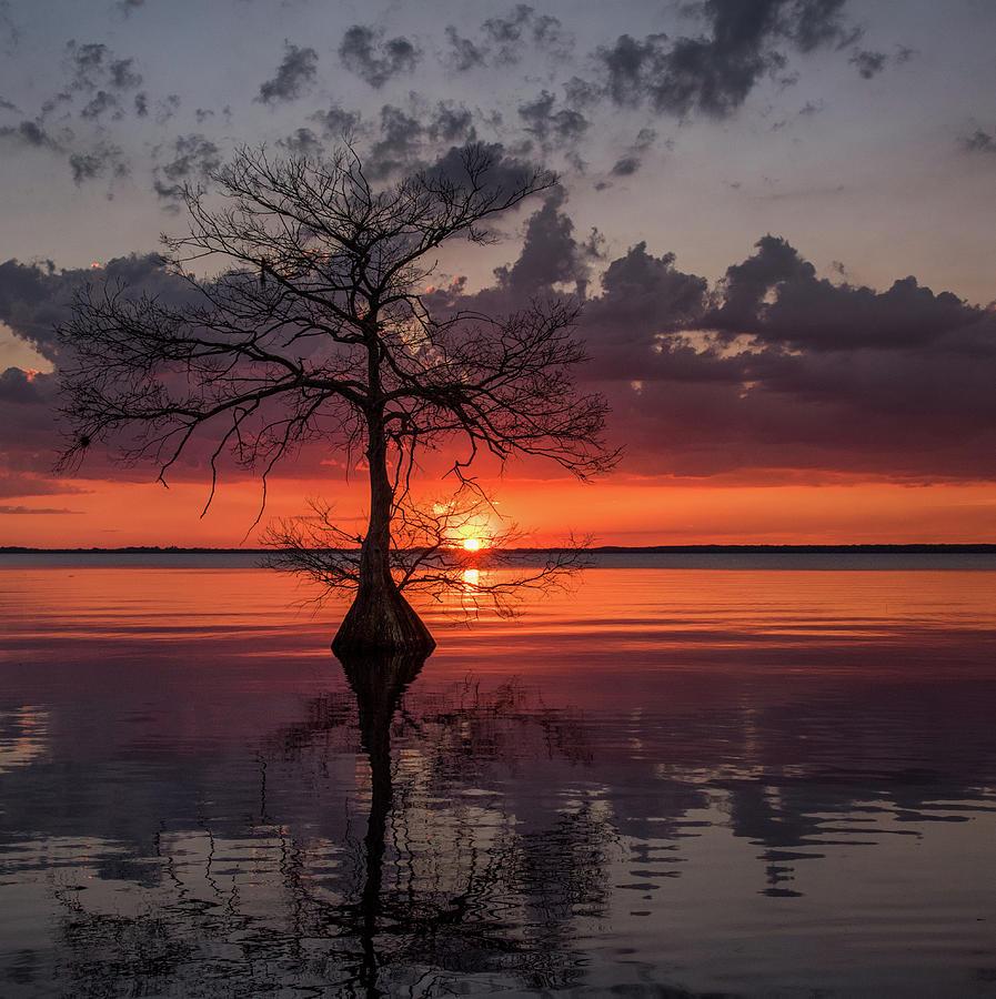 Sunset by Georgia Wilson