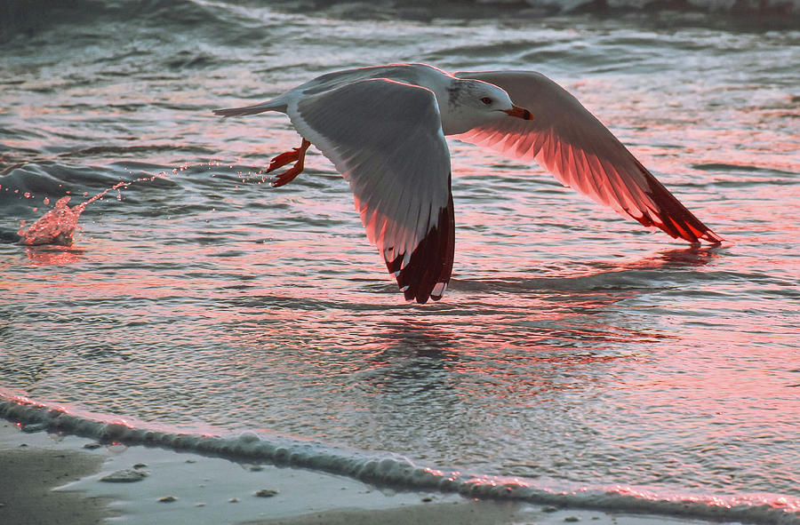 Sunset Photograph - Sunset Glide by Ashleena Valene Taylor