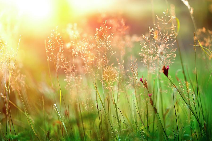 Sunset Grass Photograph by Avalon studio