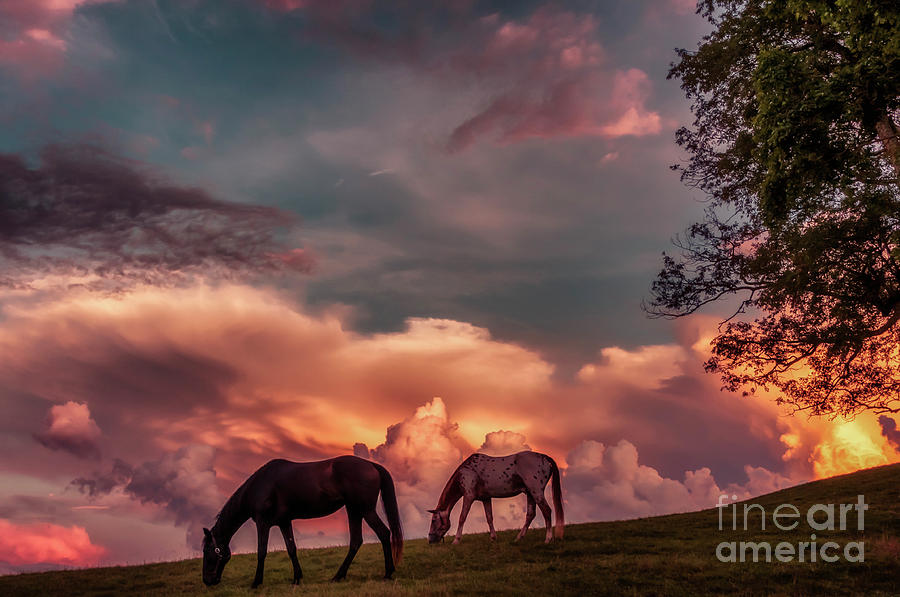 Sunset Grazing Horses by Thomas R Fletcher