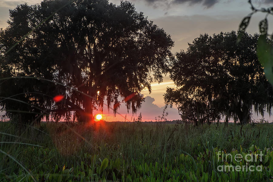 Trees Photograph - Sunset Oaks by Rick Mann