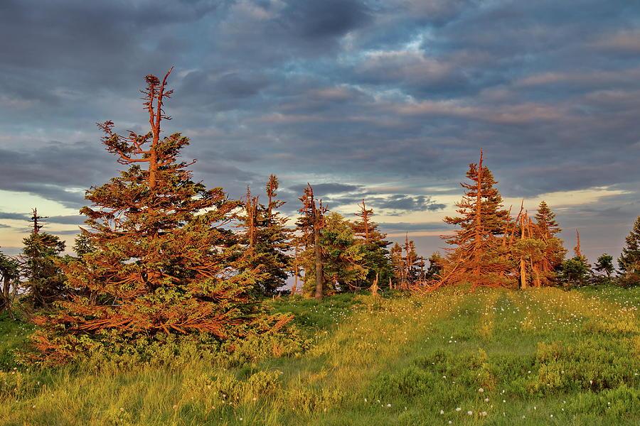 Sunset on the mountain meadow by Ren Kuljovska