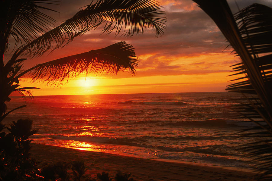 Sunset On The Ocean Wpalm Trees, Oahu Photograph by Bill Romerhaus