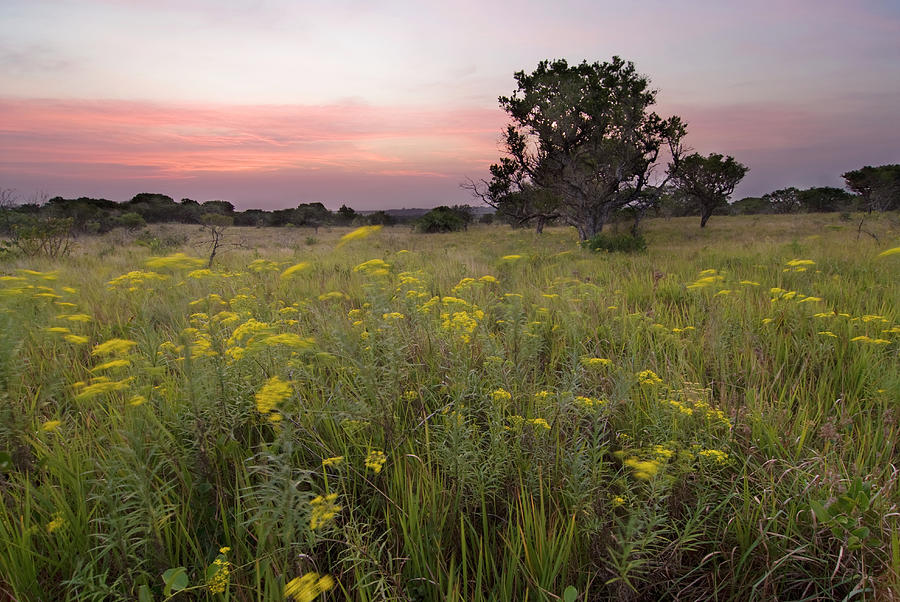 Sunset Over A Field Of Yellow Flowers Photograph by Emil Von Maltitz