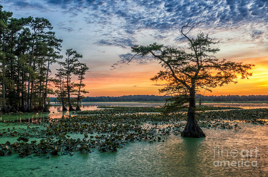 Beauty Photograph - Sunset Over Bald Cypress From Grassy by Anthony Heflin