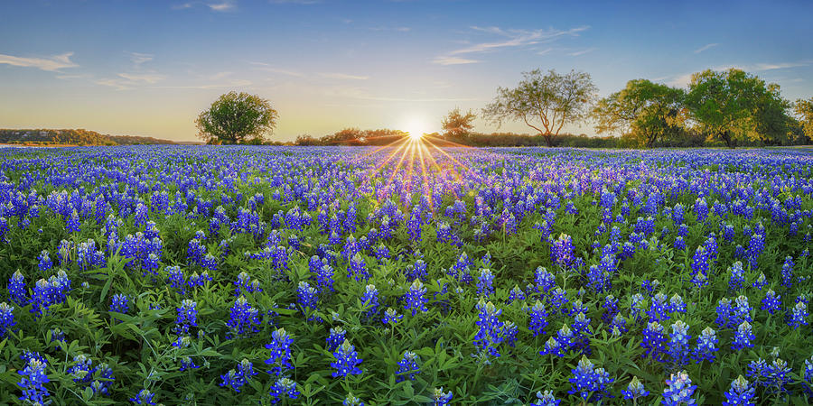 Sunset Over Hill Country Bluebonnets Panorama 1 Photograph