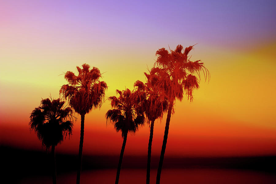 Palm Trees Photograph - Sunset Palm Trees- Art by Linda Woods by Linda Woods