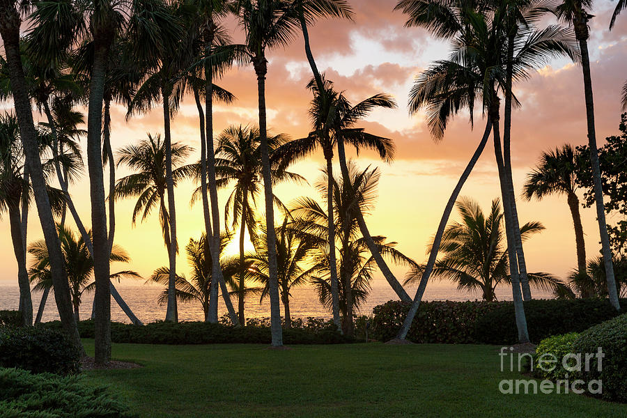 Sunset Palms by Brian Jannsen