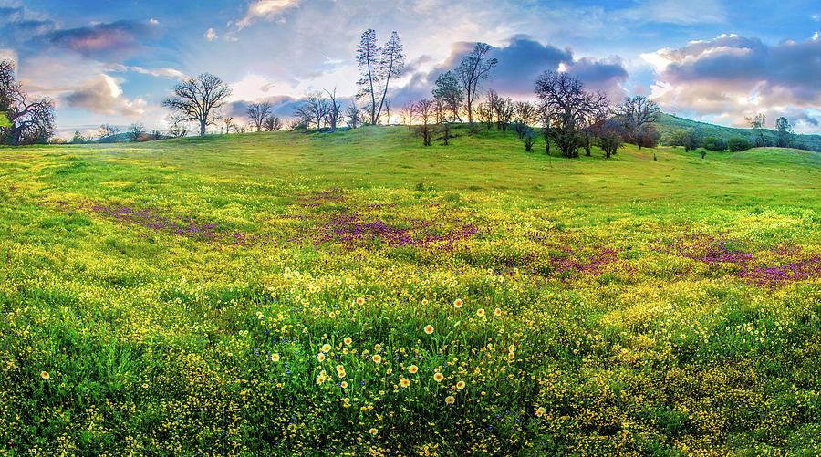 Sunset Panorama Over the Shell Creek Superbloom 2019 by Lynn Bauer