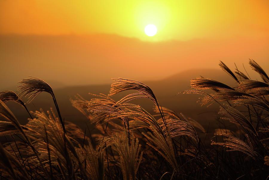 Sunset, Reeds And Wind Photograph by Douglas Macdonald