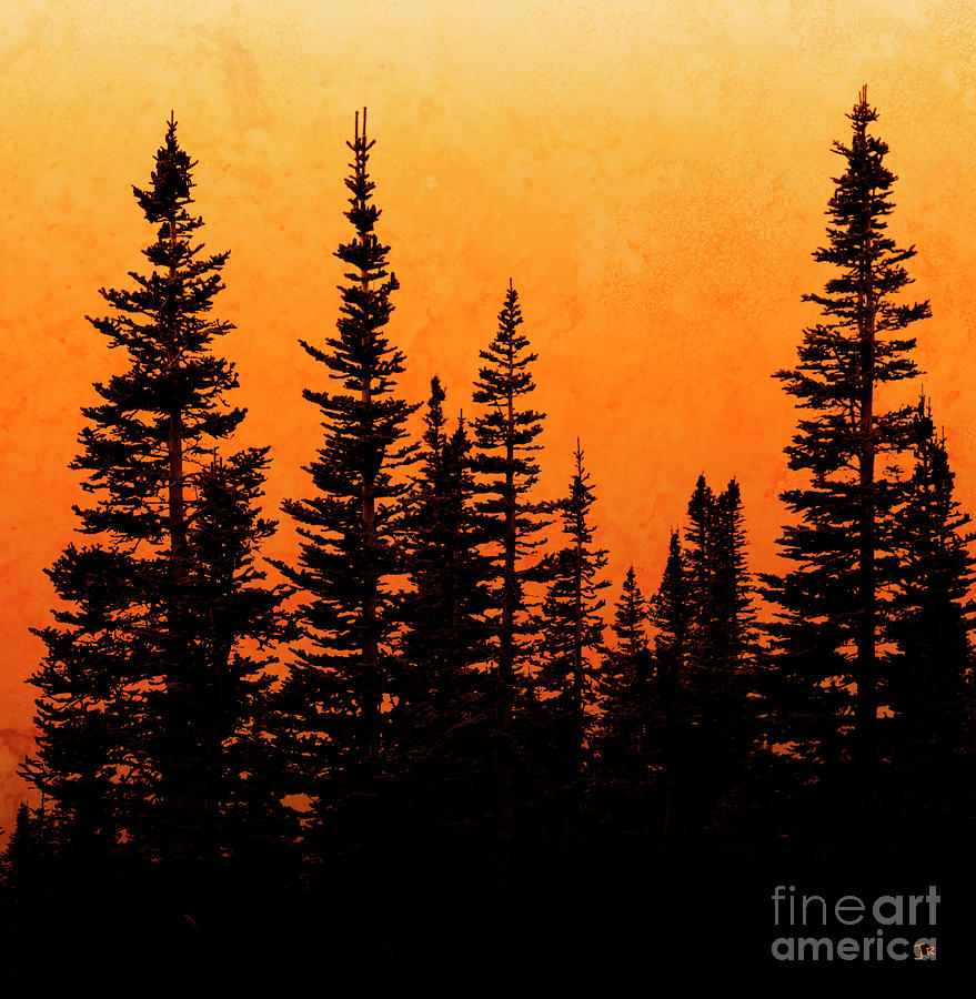 Sunset Silhouette by John Stephens