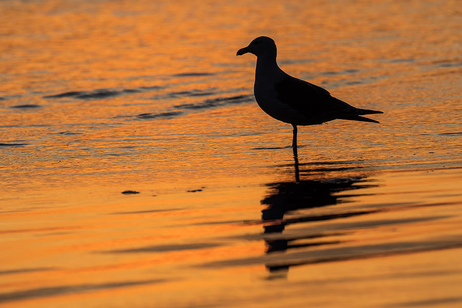 Sunset Silhouette by Robert Potts