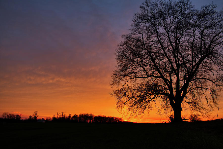 Sunset Silhouette Tree by Mark Dodd