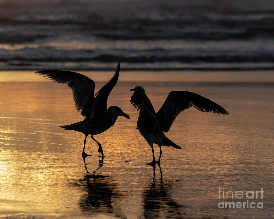 Sunset Squabble by Mike Dawson