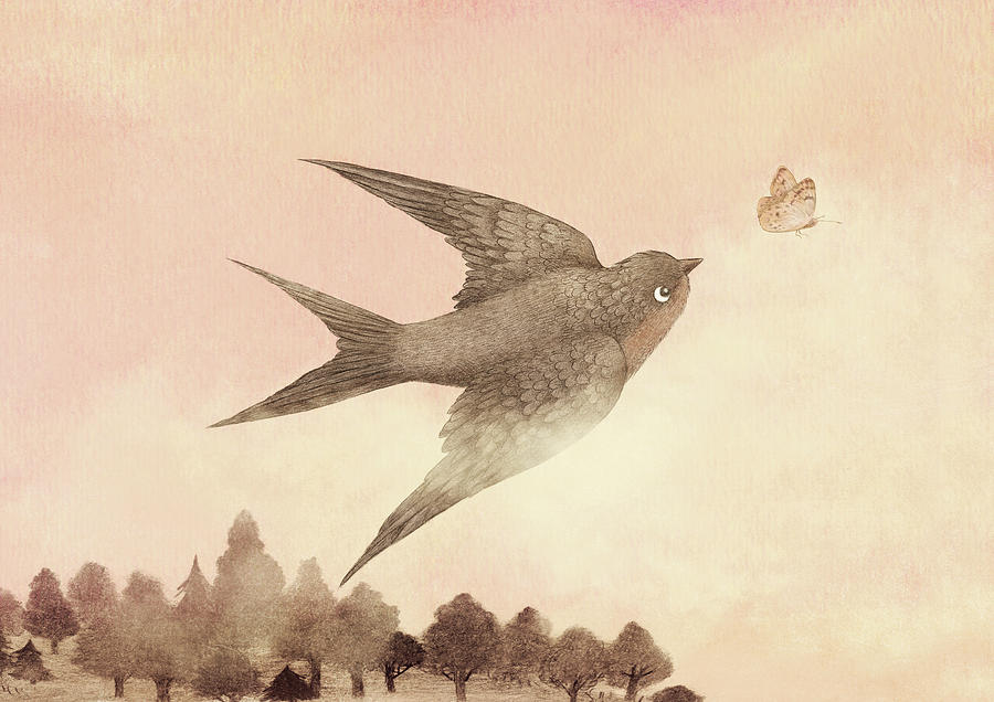Butterfly Drawing - Sunset Swallow by Eric Fan