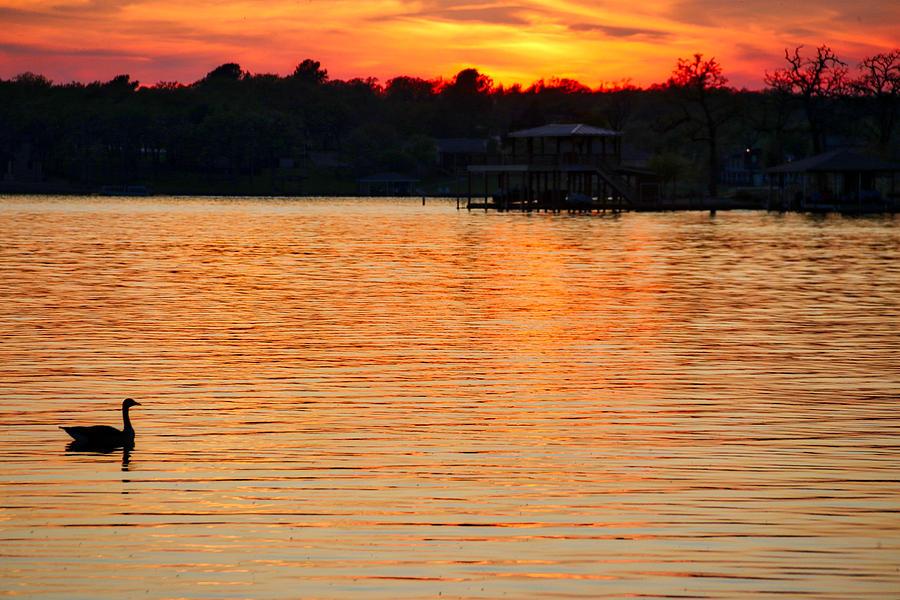 Sunset swim by Linda James