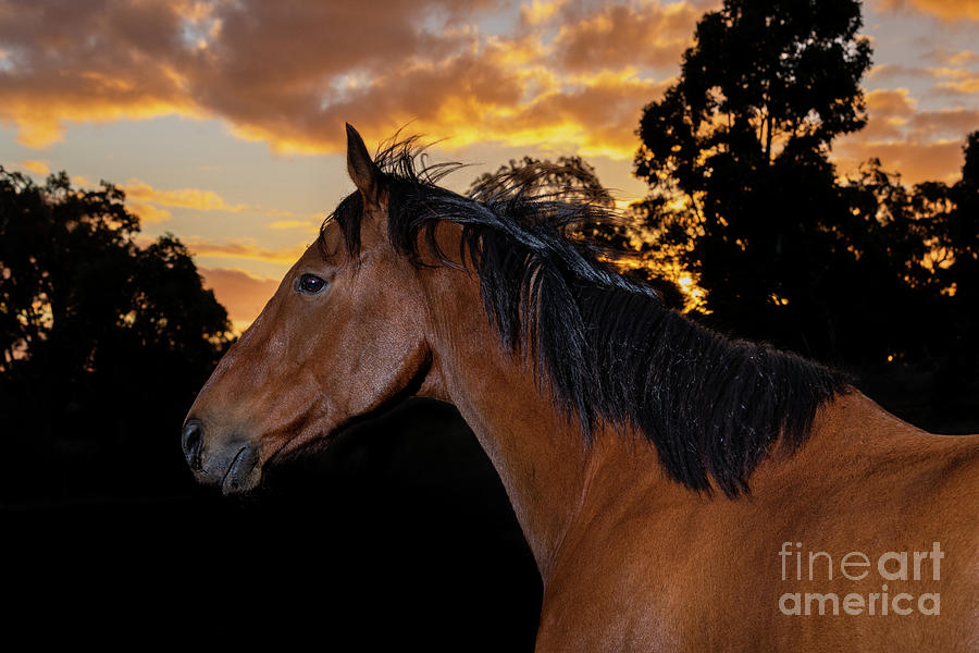 Sunset Thoroughbred by Michelle Wrighton