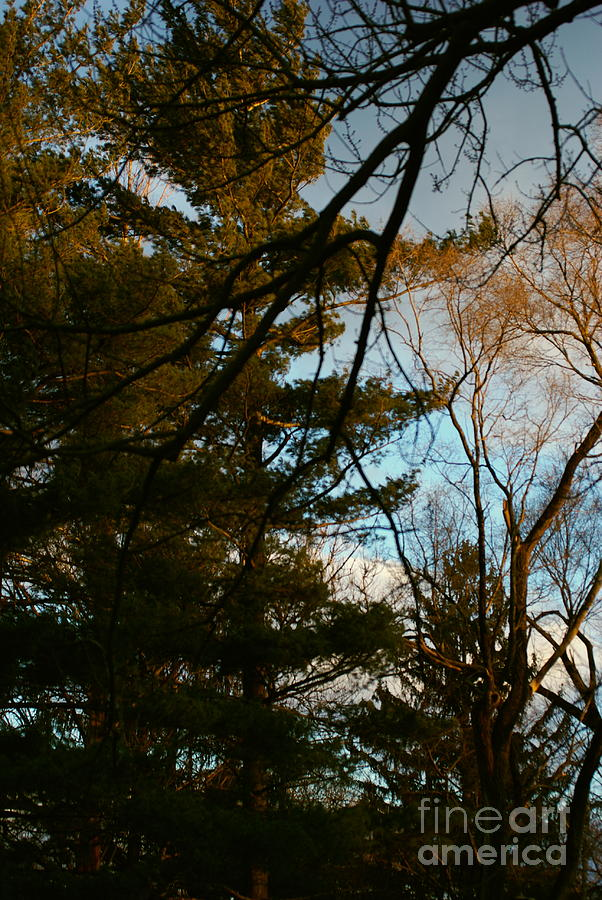 Sunset Through The Branches Photograph
