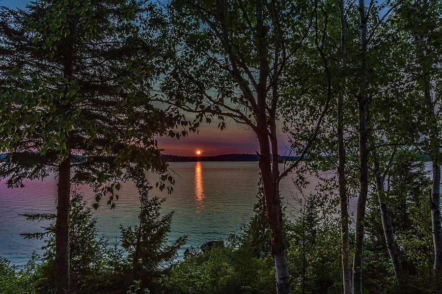 Sunset through the trees by Joe Holley