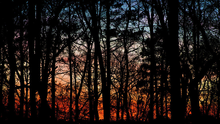 Sunset Through the Trees of Winter by James-Allen