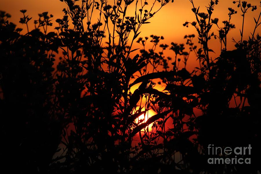 Sunset Through The Wildflowers by Karen Silvestri