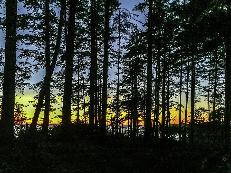 Sunset Thru the Trees by Ed Clark