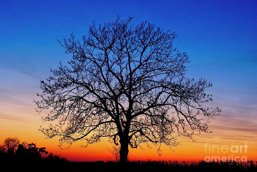 Sunset Tree by Martyn Arnold