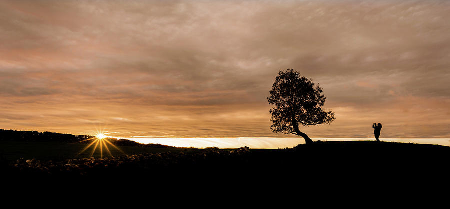 Sunset Tree by Nick Bywater