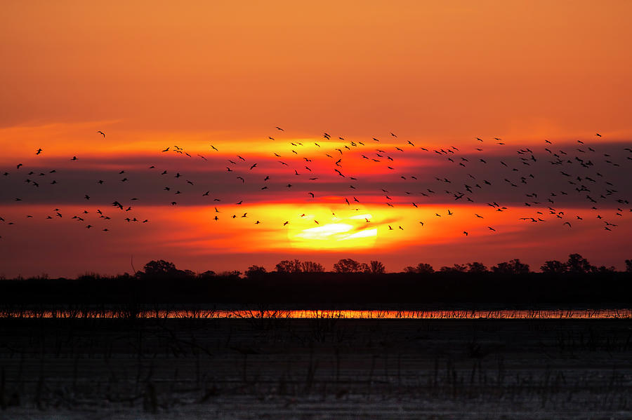 Sunset with birds by Pablo Rodriguez Merkel