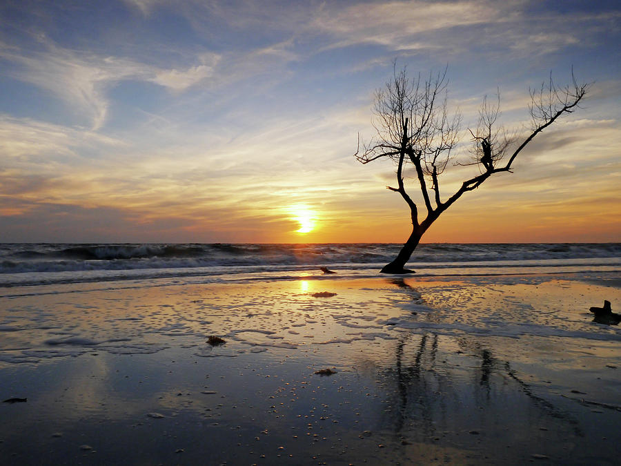 Sunset With Dead Tree At Seaside Photograph by Bernd Schunack