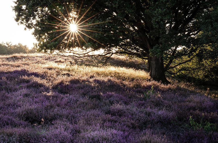 Sunset with heather by Dalibor Hanzal