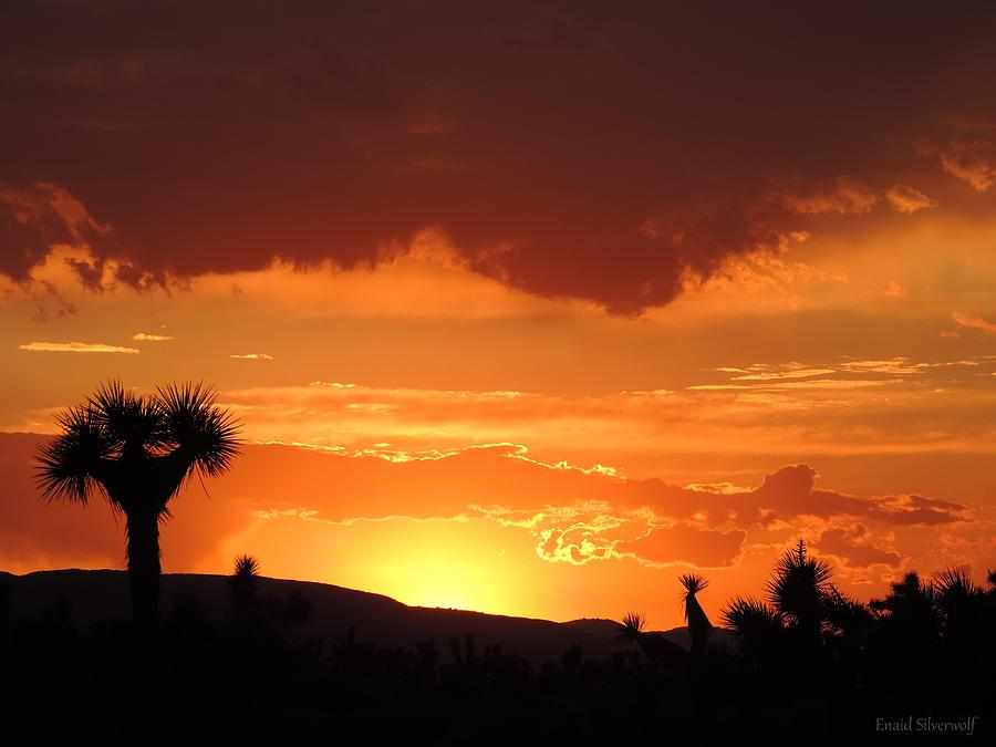 Sunset With Joshua Trees 8/31/2017 by Enaid Silverwolf