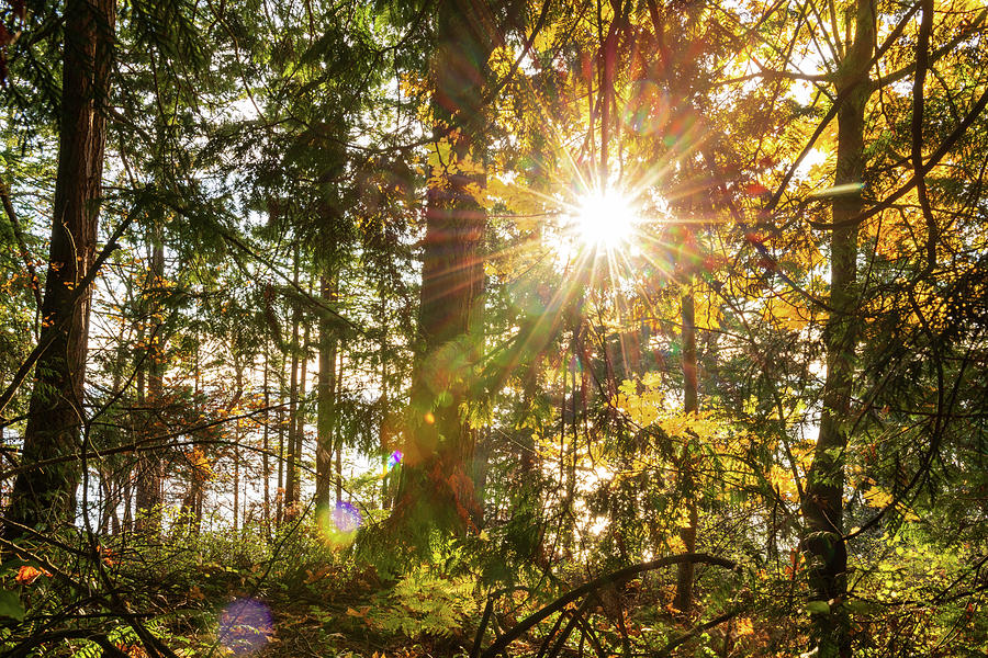 Sunshine at Whatcom County by Michael Lee