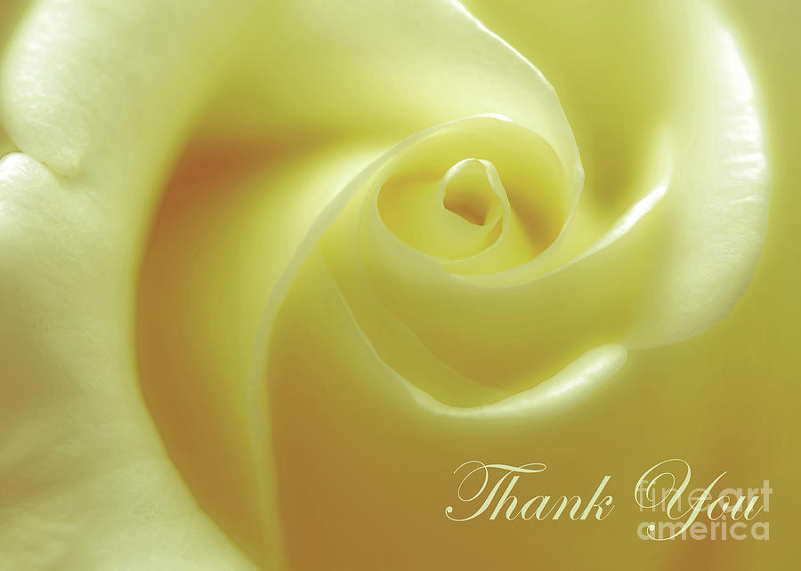 Greeting Photograph - Sunshine Rose Thank You by Banyan Ranch Studios